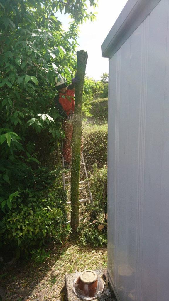 根元で切る際には周りの植物を傷つけないように注意しながら伐採しました。