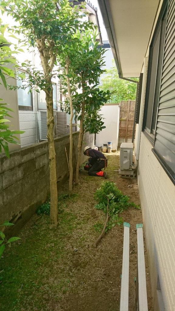 隣の住宅との距離が近い場所はガラスやブロック塀などに注意を払いながら伐採。