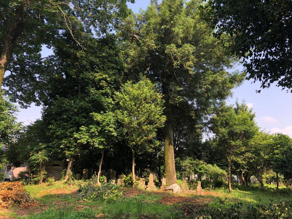 木の真下には江戸時代~明治初期に建てられたと思われるお墓が点在