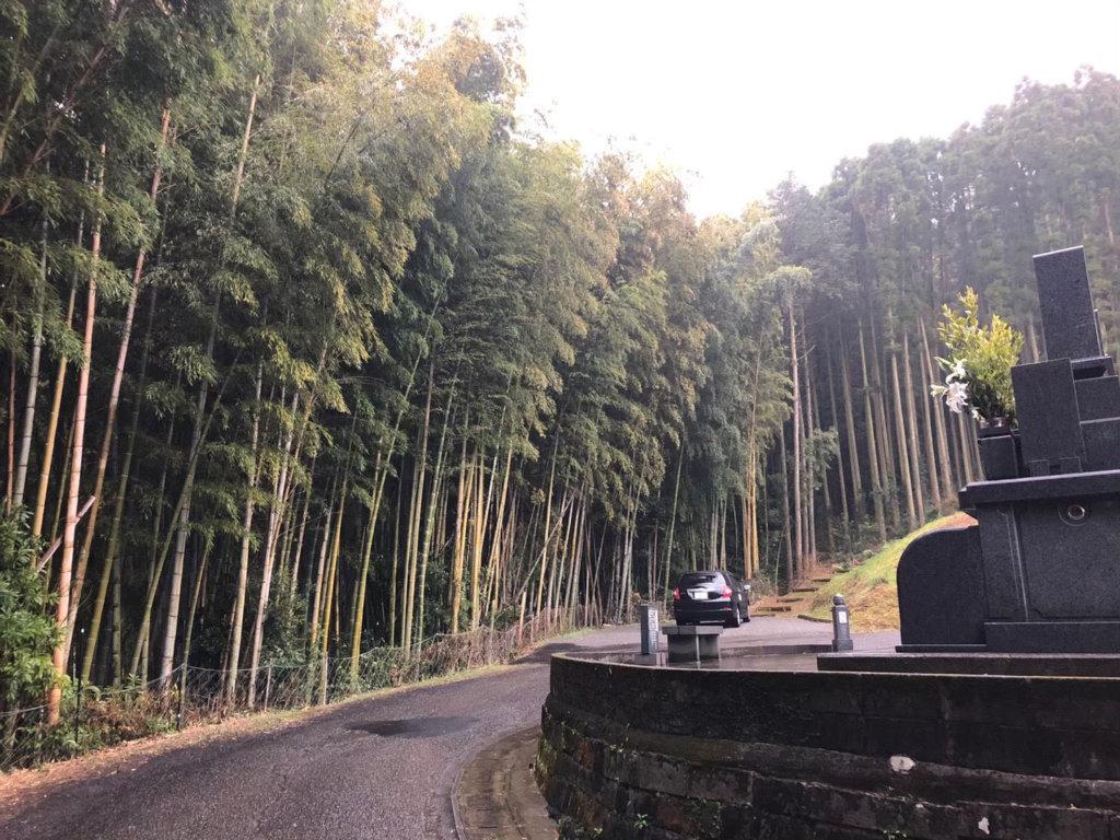 画像左側が今回伐採をご依頼頂いた竹林