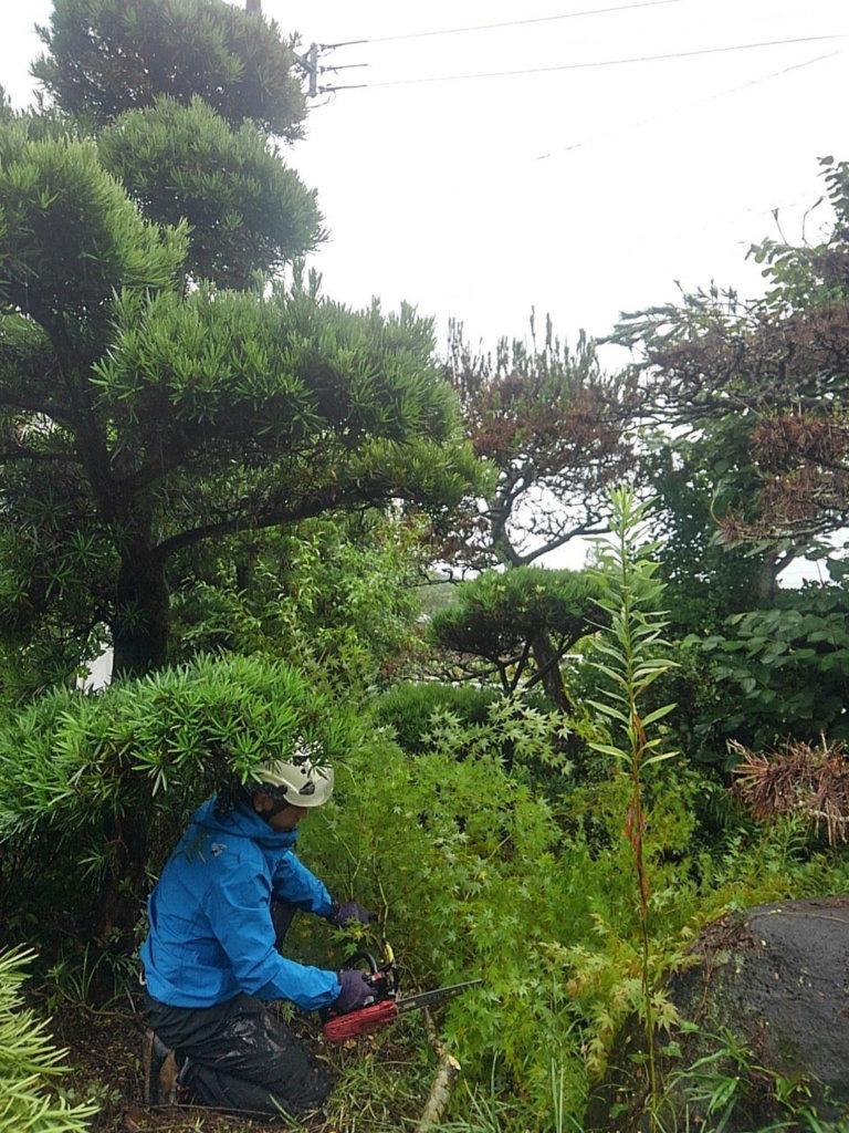 枝と幹を切り分けながら伐採作業を進めます。