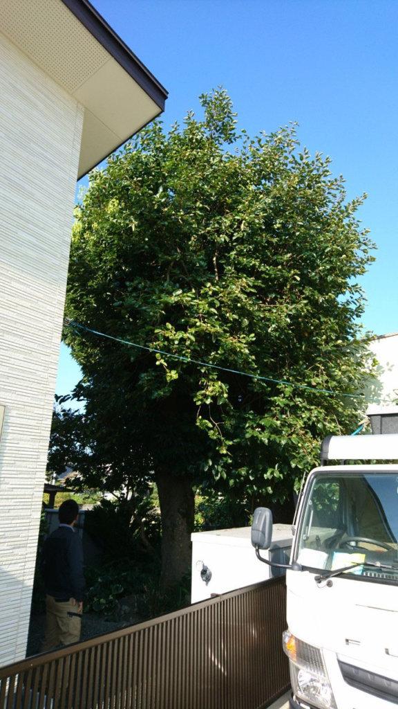 重なって見えますが立派なニッケ2本と柿の木が1本あります