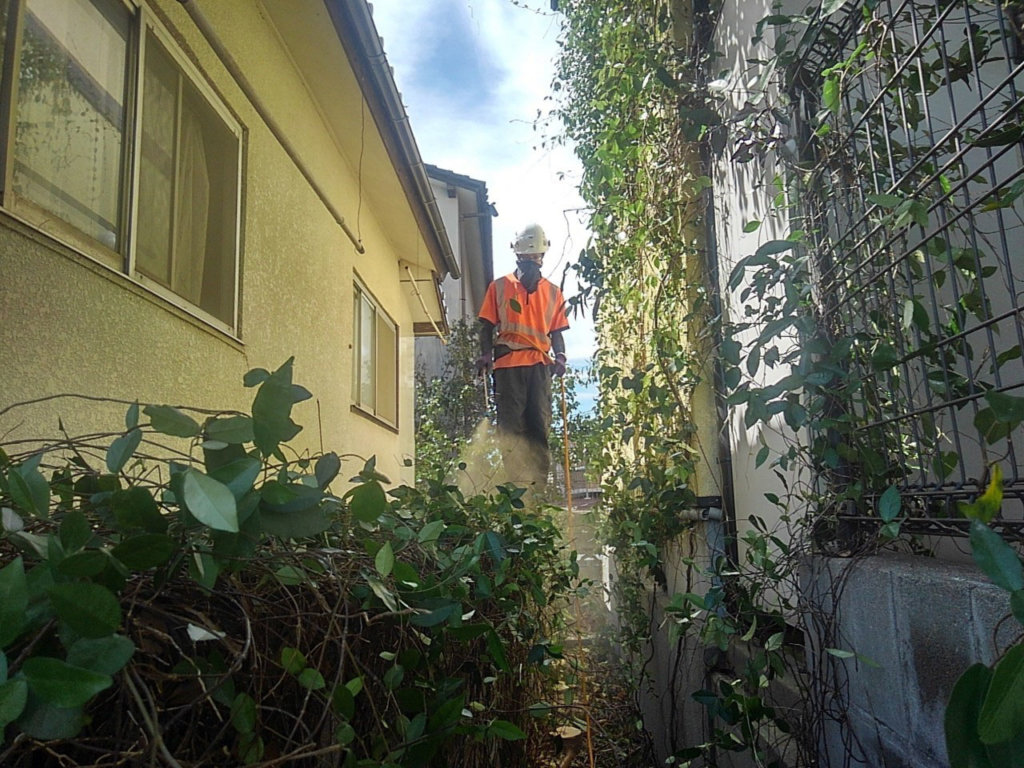 搬出を終えた後はカズラに除草剤を散布