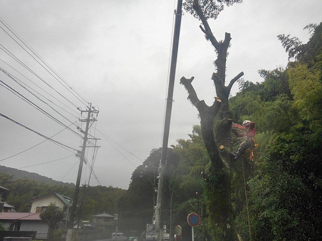 吊り切り作業の様子。迫力ある伐採風景に立ち留まって見られる方もしばしば