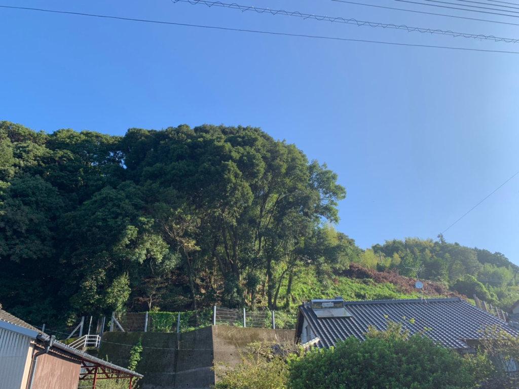 中央に見えるニッケイ、カシ、シイ等の樹高を下げて、ヤマザクラ