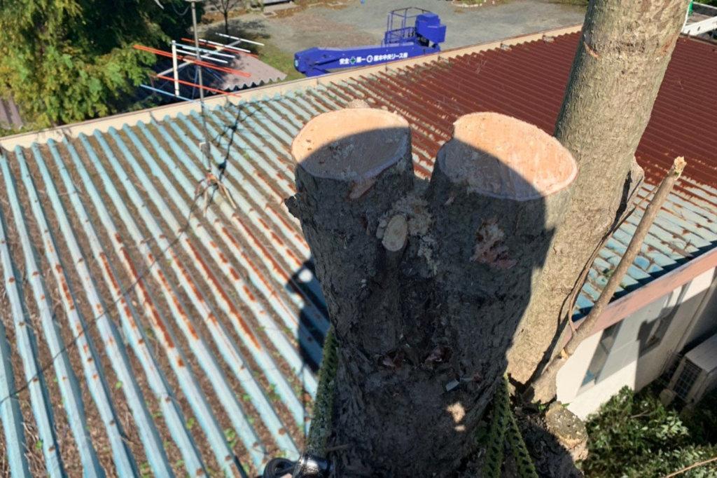 樹上からの画像。どれだけ建物の屋根に近いかがお分かり頂けるかと思います。