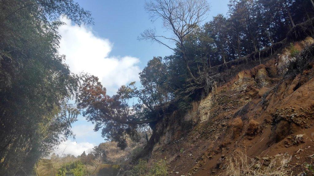 依頼頂いたのは右側の崖際に写っているスギやクヌギなど