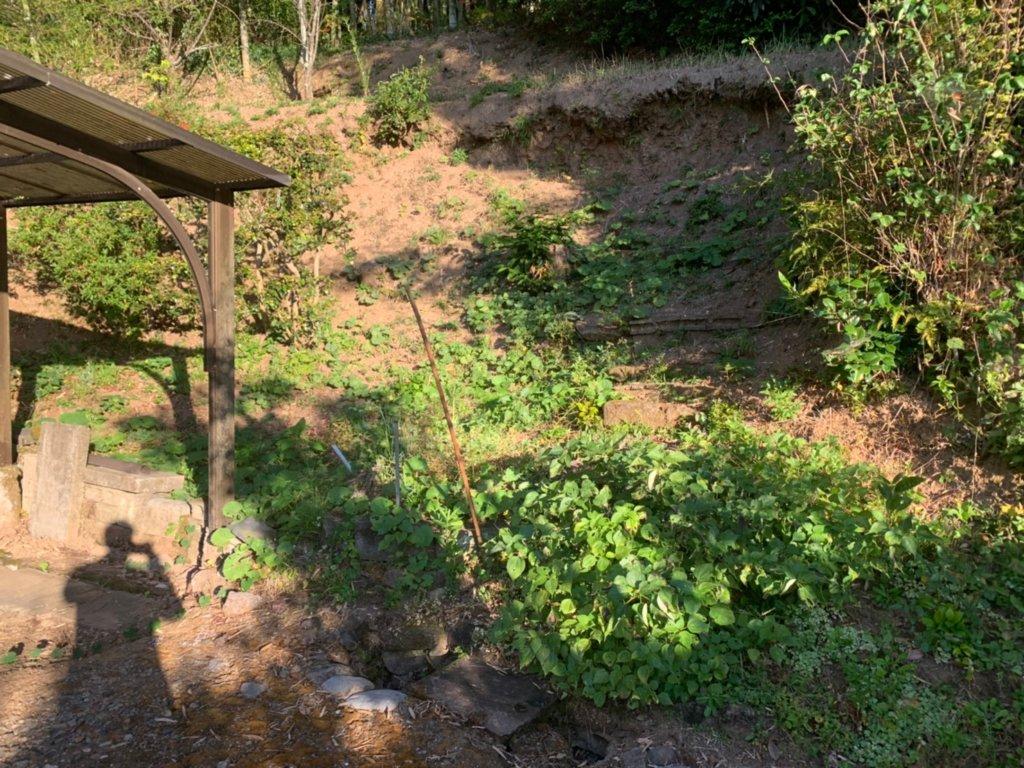 最後に急斜面での除草作業。作業前。