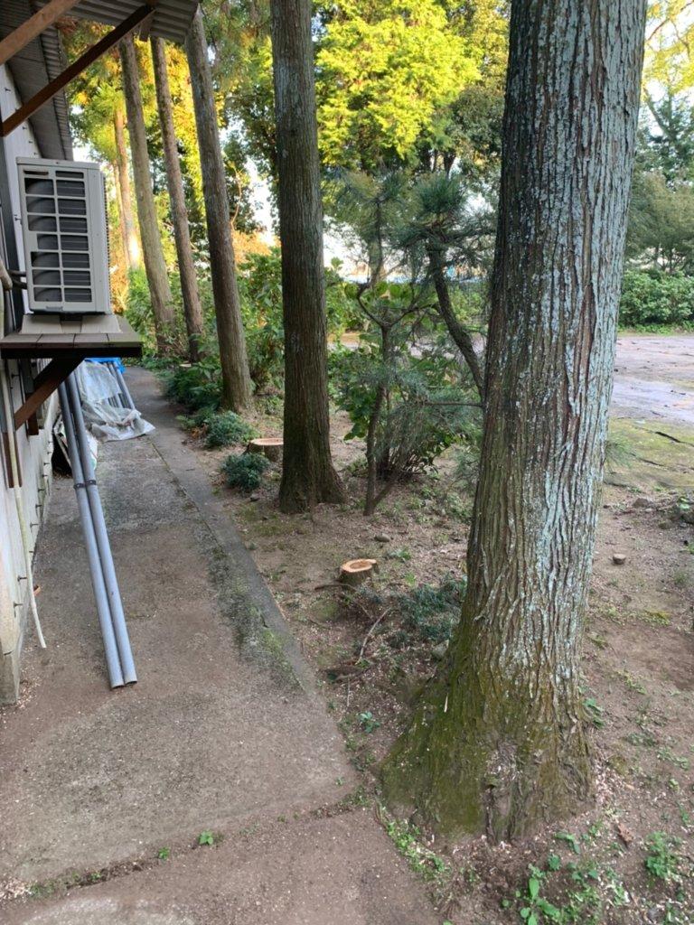 斜面にあった桜の伐採完了後